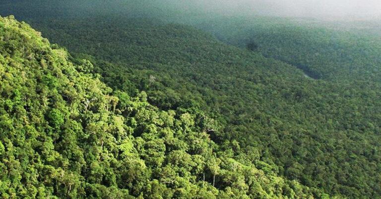 Der dichte Dschungel des Kardamom-Gebirges in Kambodscha.