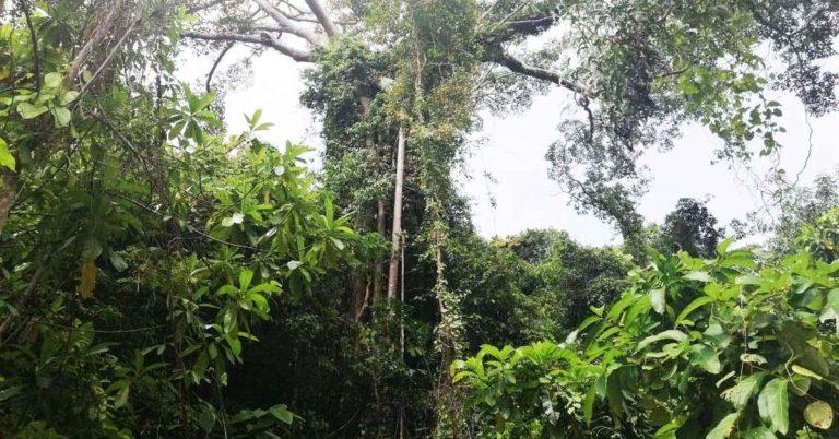 Dschungel im Nationalpark von Kep.