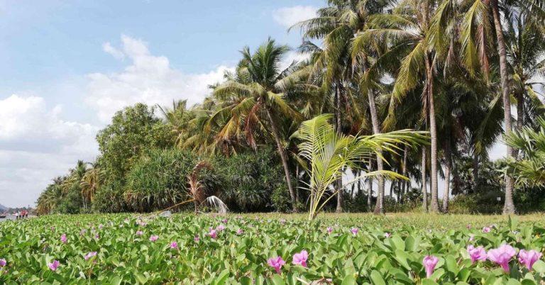 Palmen und Blumen am Strand, in der Provinz Kep.