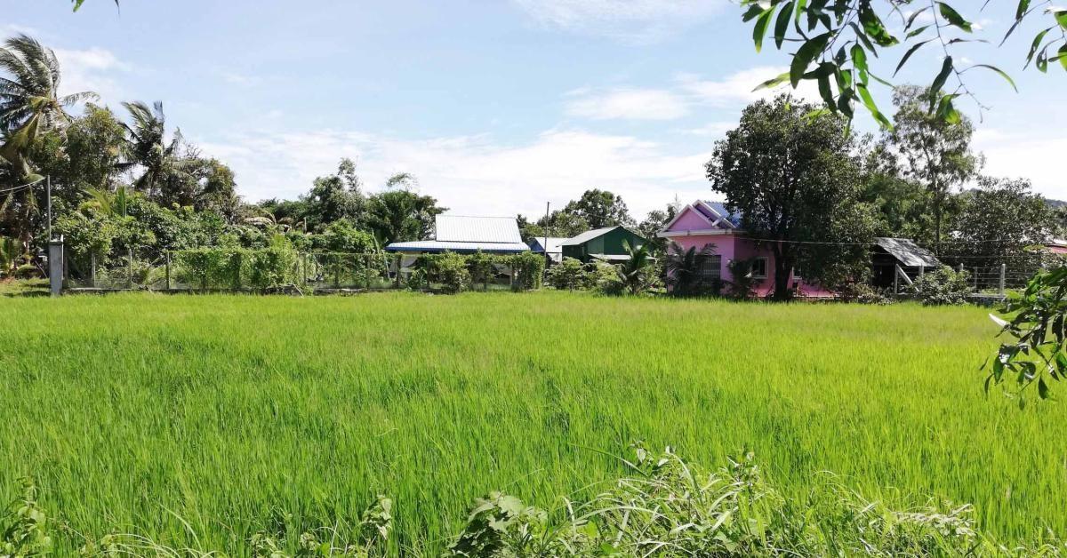 Ein grünes Reisfeld und einige Häuser in Kep.